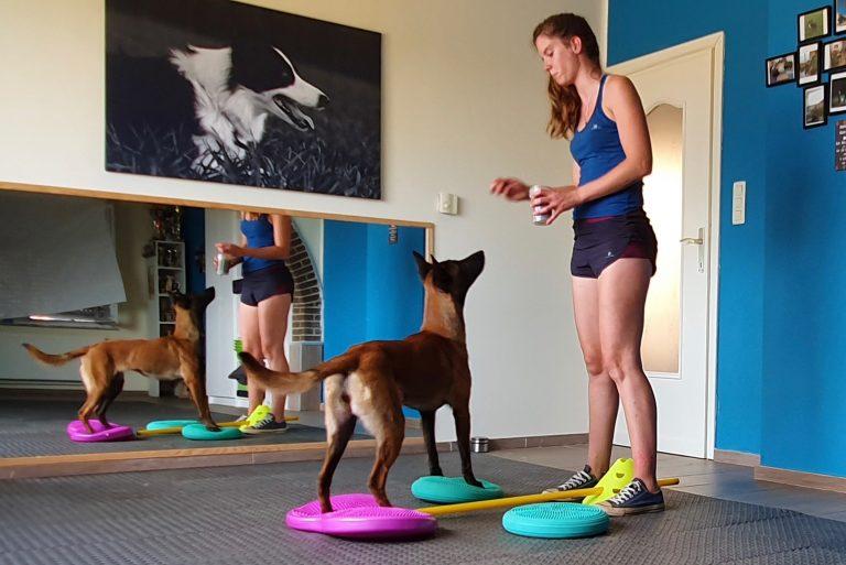 Workshop 'De sporthond gezond houden' door Canifit